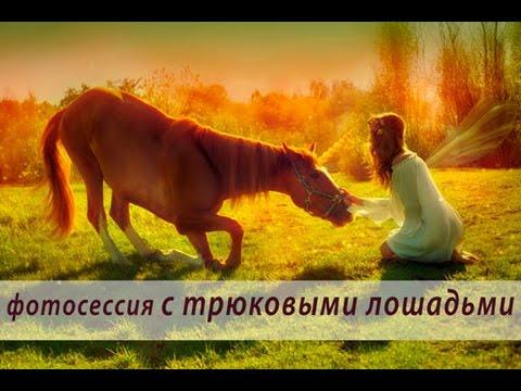 Фото с лошадьми: фотосессия с трюковыми лошадьми