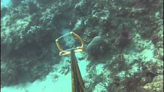 Brandon / Natalie Dive in FLL