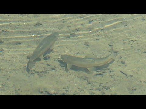 Acid Rain And The Effect On Fishing Communities