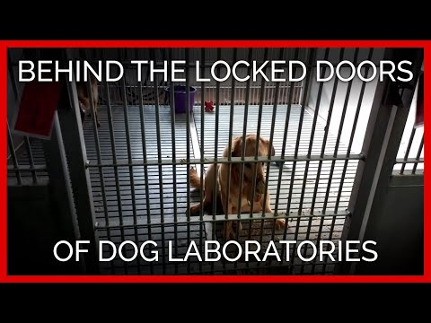 Behind the Locked Doors of Dog Laboratories in the U.S. and France