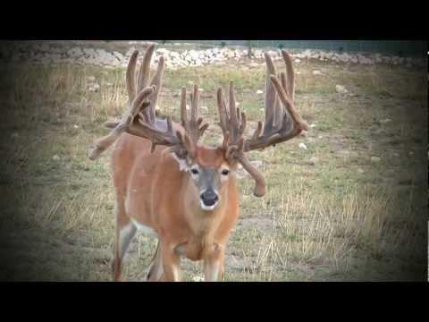 Whitetail Sales Deer Farms   Kevin Grace