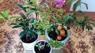 Уход за комнатными растениями весной.(, 2016-03-16T17:36:25.000Z)