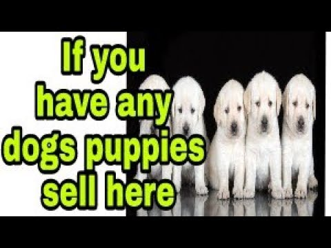 Sell your dog puppies in best price in hindi