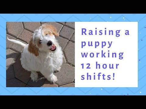 Tips to raising a puppy working 12 hour shifts!