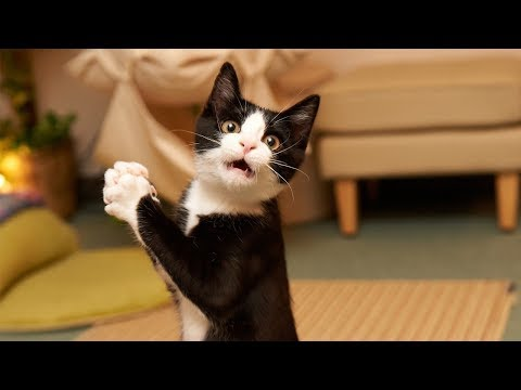 Top Funny Cats Videos Compilation 2017 #9 🐱 Best Funny Cat Fails