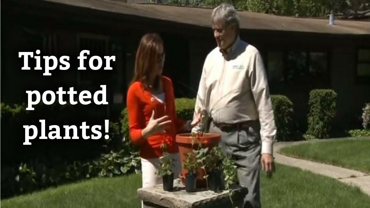 Potted Plants Tips Tricks Expert Landscape Advice Youtube