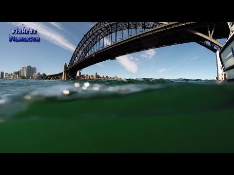 Diving for a PORSCHE submerged Under The Sydney Harbour Bridge
