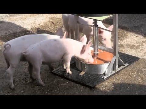 Suisse Tier Innovationswettbewerb: Futtertrögli