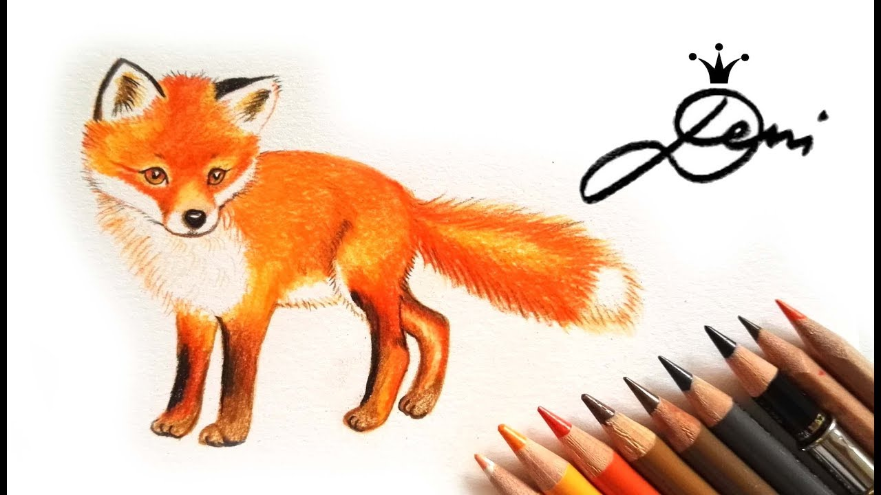 wie zeichnet man einen fuchs in farbe und echtzeit how to draw a fox. Black Bedroom Furniture Sets. Home Design Ideas