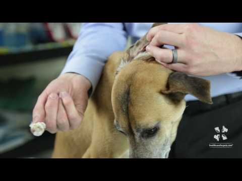 Vet Tutorial | How to Properly Clean a Dog's Ear