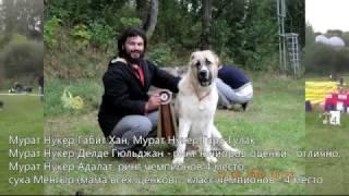 Чемпионат САО «Достояние Беларуси 2016»
