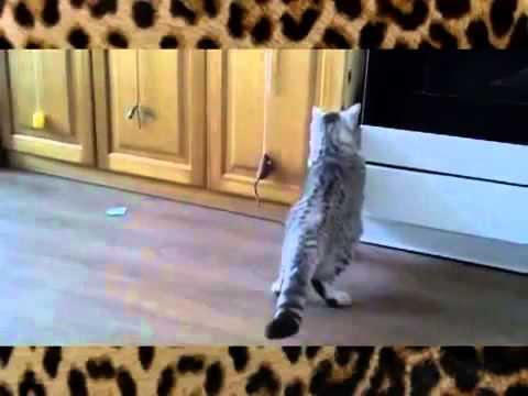 Приколы с котами и кошками Смешные Коты боятся всего
