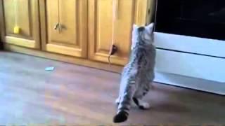 Когда кошки боятся