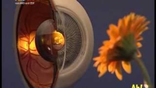 Wissen macht Ah!: Was ist Farbenblindheit?