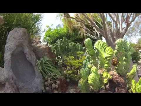 Eckart Coral Reef Succulent Garden