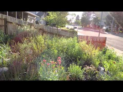 My Colorado Xeric Garden