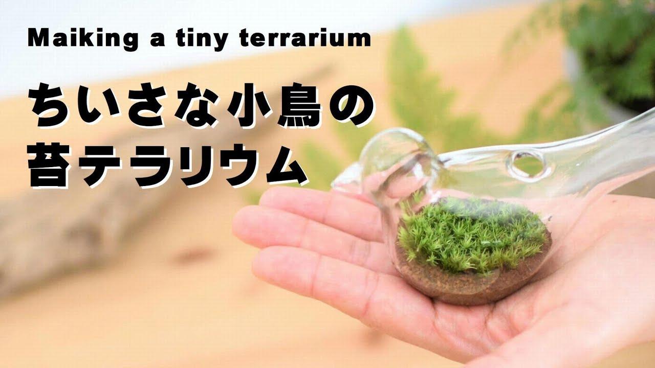 小鳥のガラス瓶に植える苔テラリウム|小さな苔テラリウムの植え方|How to make a tiny terrarium
