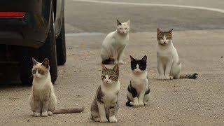 Смешные коты, кошки и другие животные (funny cats 2019) – НЕЛЬЗЯ УНЫВАТЬ, ОГНЕННЫЕ ПРИКОЛЫ