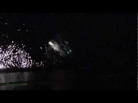 Oarfish sighting around RRS James Cook