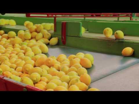 Frutas Armero, fresh lemons from Spain - Short Version (English)