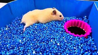 Rainbow Pyramid Maze - Pool Maze for Hamster