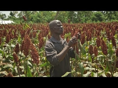 Drought Tolerant Crops give hope to Kenyan farmers: Martin Lumala's Story