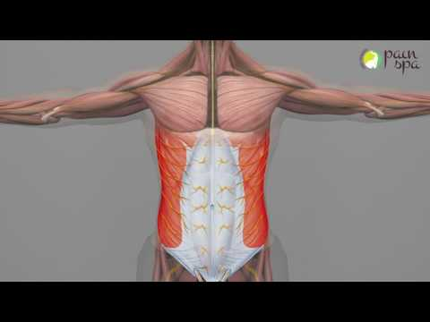 search result youtube video cutaneous, Muscles