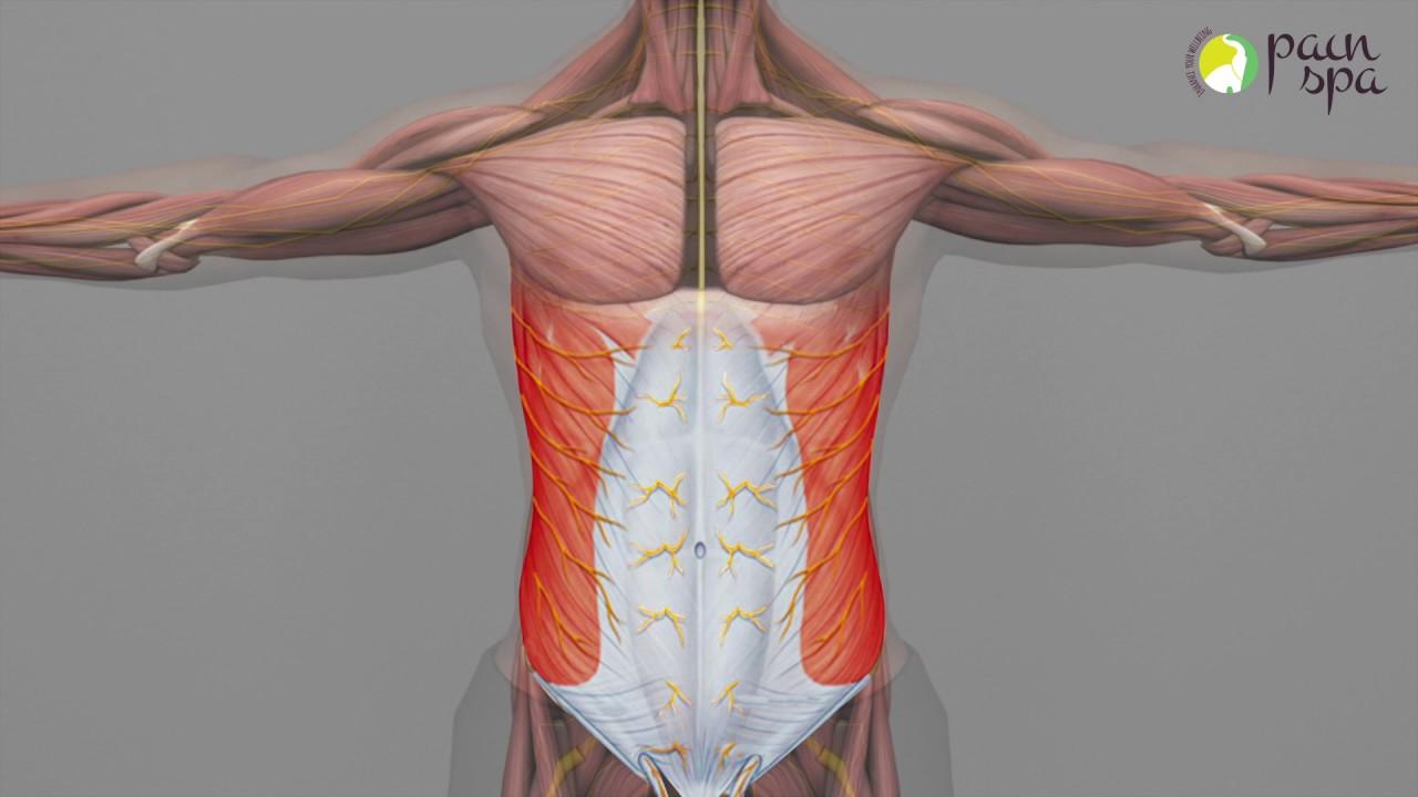 Chronic Abdominal Wall Pain Abdominal Cutaneous Nerve Entrapment