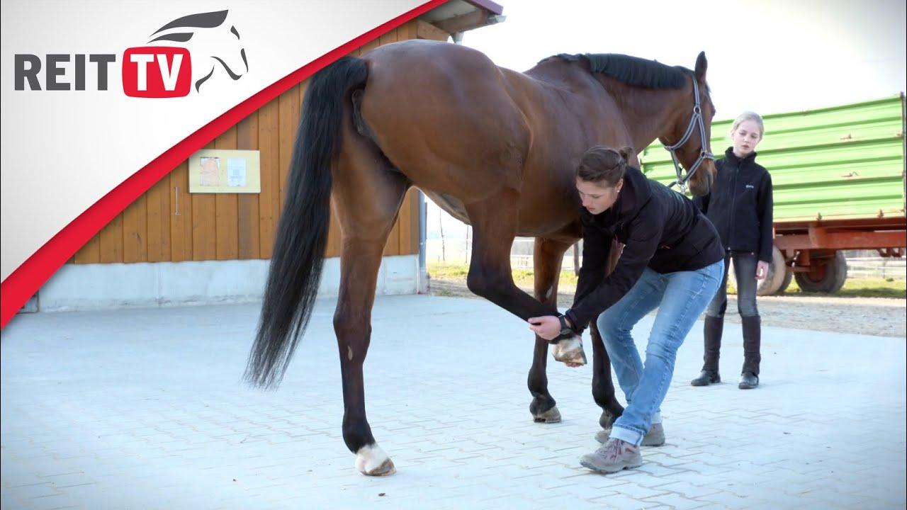 pferdegesundheit physiotherapie f r pferde mit faye f llgraebe youtube. Black Bedroom Furniture Sets. Home Design Ideas