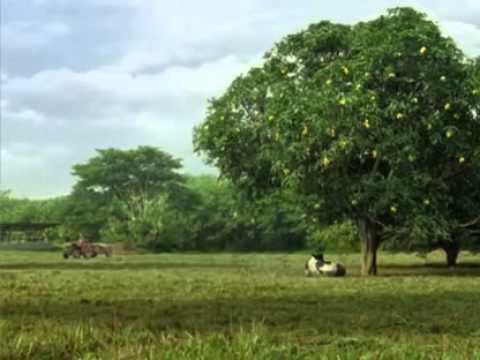 Magnolia - Mango Fruit Milk