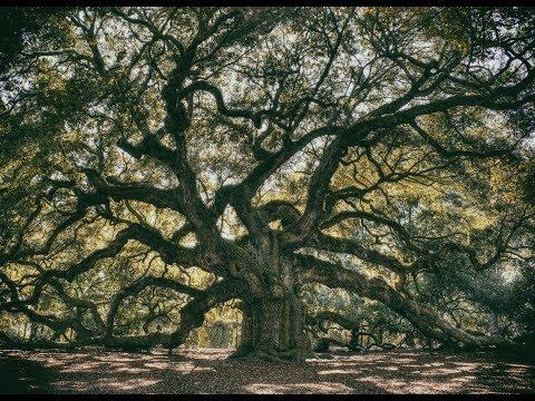 Kitchens of Distinction - Oak Tree