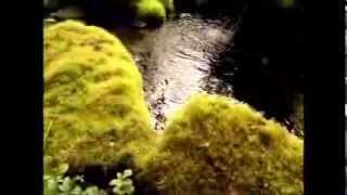 Sammakon elämää - Frog Life