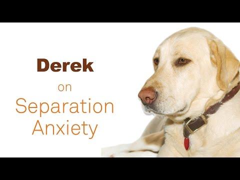 Meet Derek!