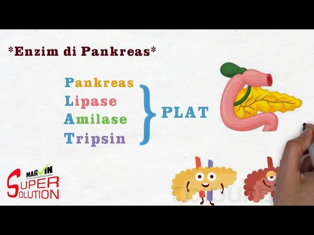 [Super Solution] Enzim di Pankreas