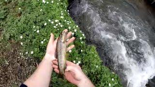 Pêche de la truite au toc en petite rivière