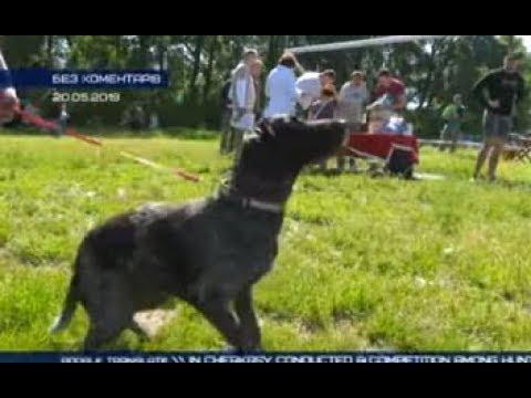 ТРК ВіККА: Без коментарів. Змагання собак