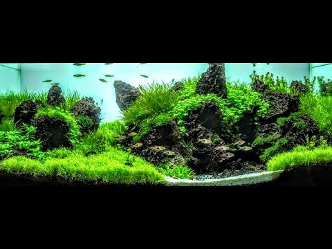 Utricularia Graminifolia Aquascape Dragon Stone Aquascaping Youtube