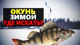 Рыбалка на окуня зимой Где искать