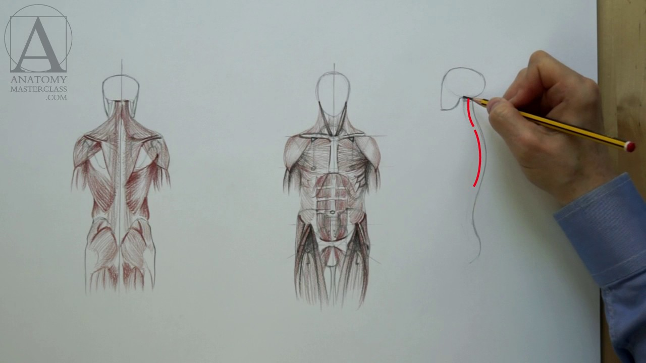 Muscles Of The Body Anatomy Master Class For Figurative Artists