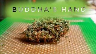Strain Review - Bhd - Buddhas Hand - MMJ Total Health Care