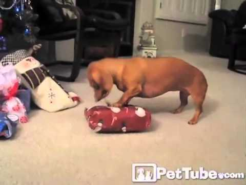 funniest christmas pet moments compilation pettube