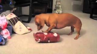 FUNNIEST Christmas Pet Moments COMPILATION- PetTube