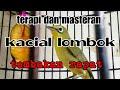 Masteran Kacial Lombok Tembakan Rapat  Mp3 - Mp4 Download