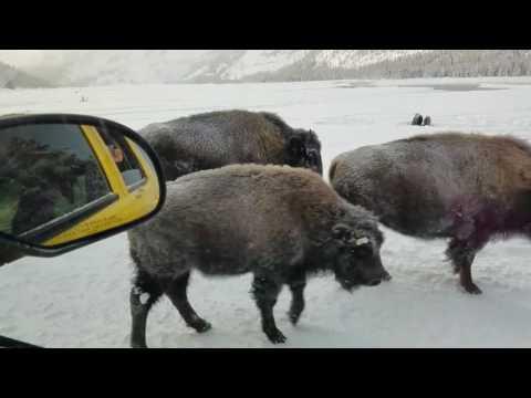 Nossa Visita ao West Yellowstone no Inverno !