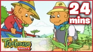 The Berenstain Bears - The Summer Job / The Big Red Kite