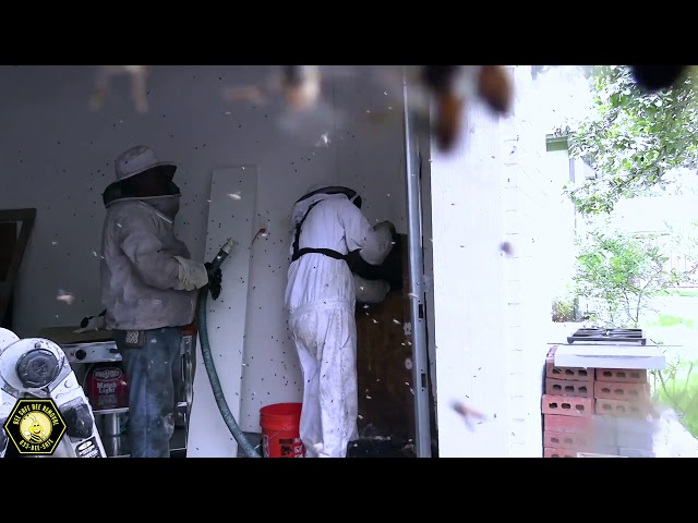 Dangerous bees attack home in Garland, TX- 60,000 bees inside wall