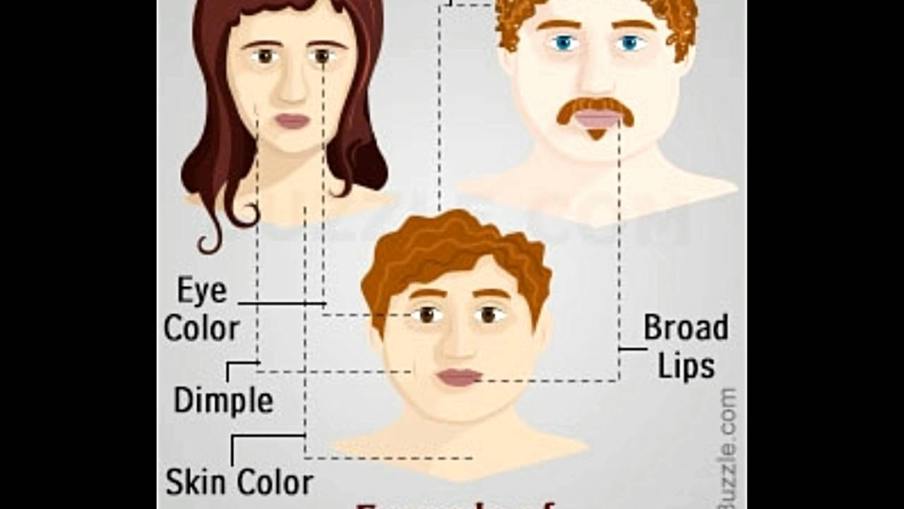 Dominant And Recessive Traits In Humans Youtube