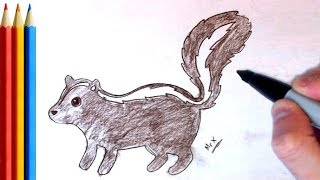How to Draw skunk -  Step by Step Tutorial