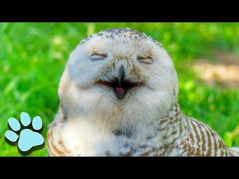 100 Funny Bird Videos | Hilarious Animal Compilation