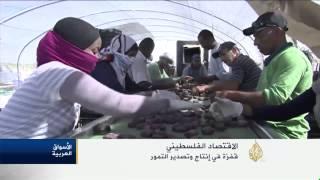 قفزة في إنتاج وتصدير التمور لدعم الاقتصاد الفلسطيني